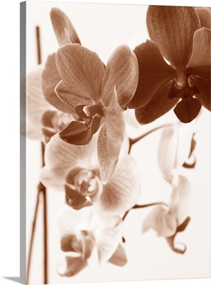 Dreamy Orchids I