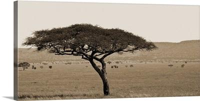 Serengeti Horizons I