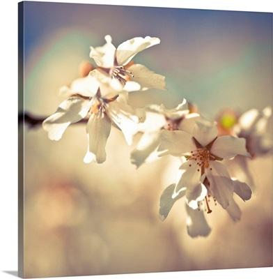 Soft Bloom I