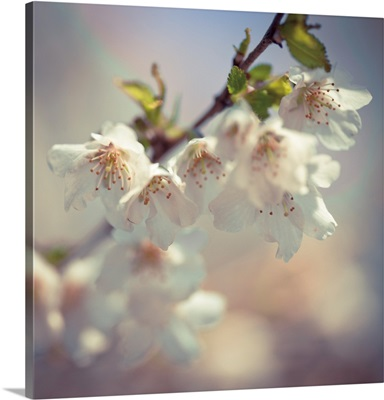 Soft Bloom II