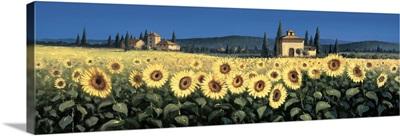 Tuscan Panorama, Sunflowers