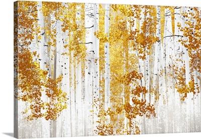 Birch Trees Y