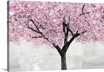 Cherry Blossoms Tree Blush