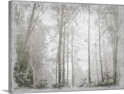 Forest Light Grey