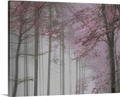 Tree Path Pink Grey 2