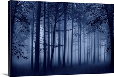 Trees Blue