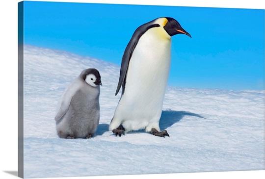 Emperor Penguins Wall Art, Canvas Prints, Framed Prints, Wall Peels ...