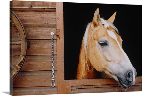 Horse sticking head out stable window wall art canvas for Window horses