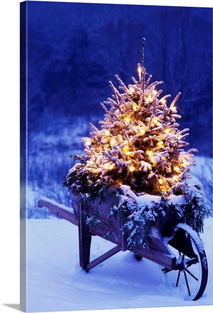 Lighted Christmas Tree.Lighted Christmas Tree In Wheelbarrow