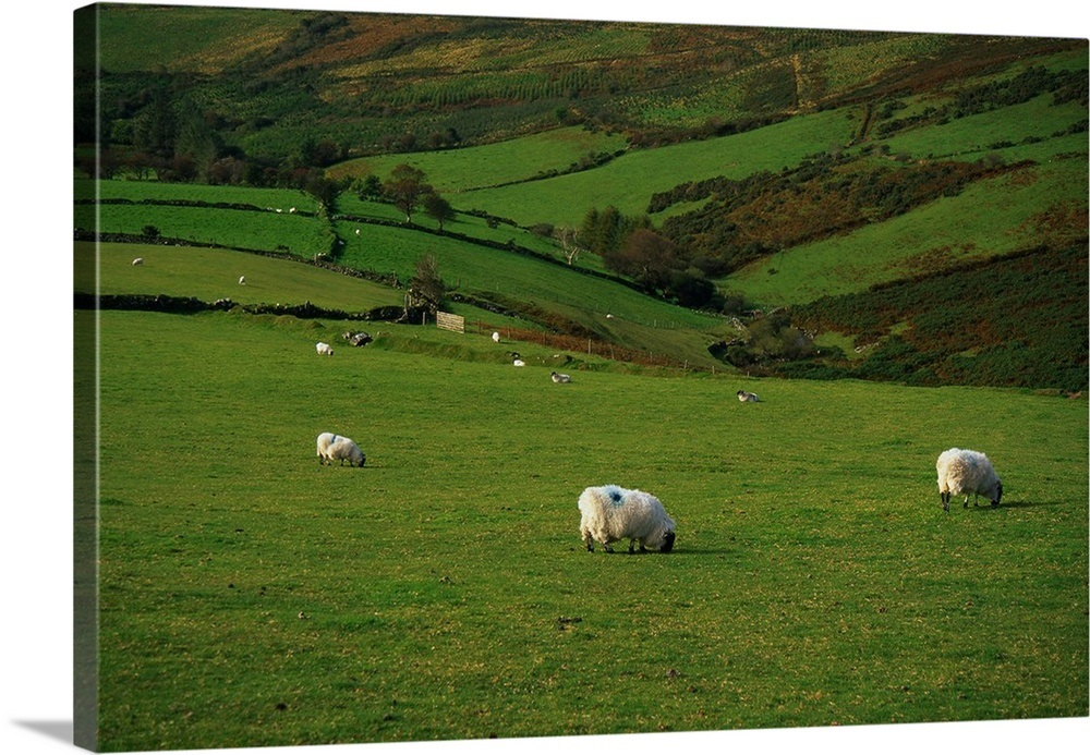 Image result for green pastures