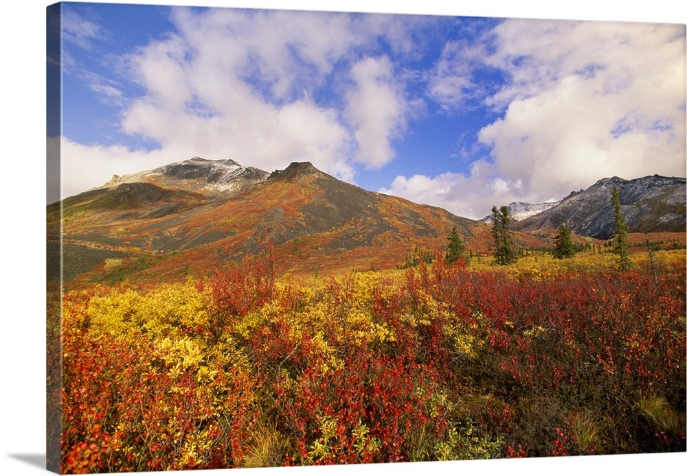 c27b26af31d Your Item was Added To Your Cart! Tundra And Ogilvie Mountains In Fall  Colors