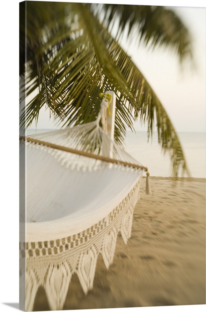 Woven Hammock Under Palm Tree