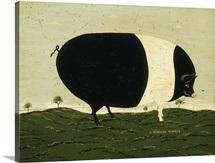 Black & White Pig
