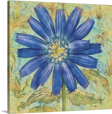 Blue Chicory, Green