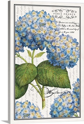 Botanical Hydrangea