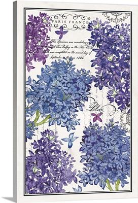 Botanical Lilacs
