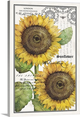 Botanical Sunflower
