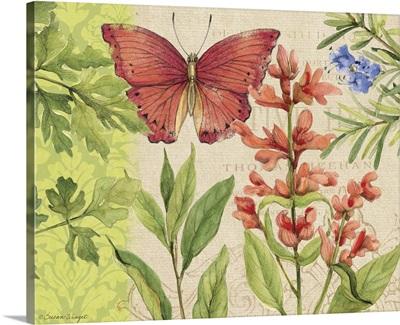 Butterlfy - Flowering Herbs