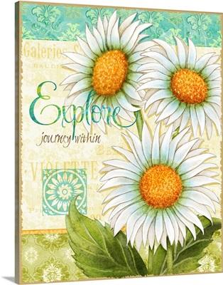 Daisies - Explore