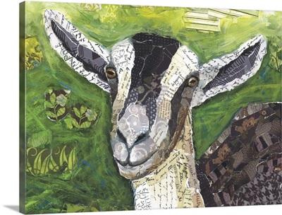Goat Collage