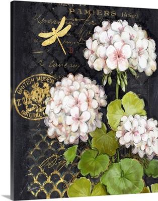 Heirloom Geraniums on Black