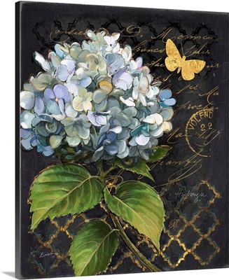 Heirloom Hydrangea on Black