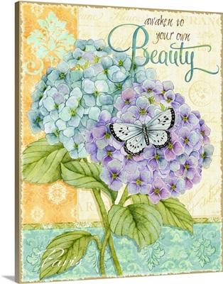 Hydrangeas - Beauty