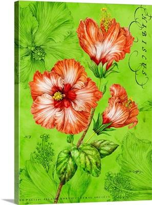 Orange Hibiscus on Green