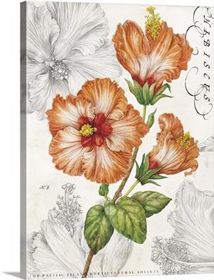 Orange Hibiscus on White