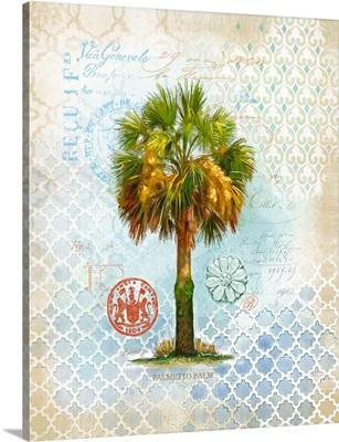 Palmetto Palm