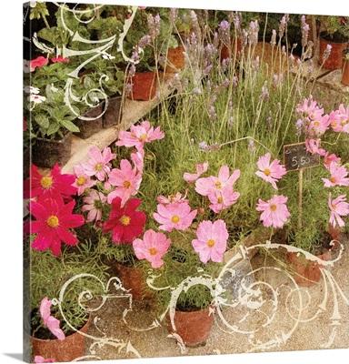 Parisian Flower Pots