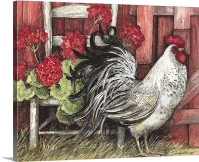 Red Barn Rooster