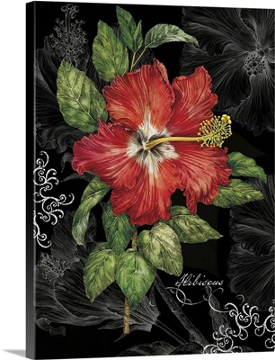 Red Hibiscus on Black