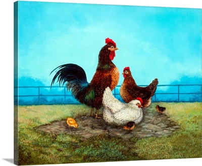Rooster Gathering
