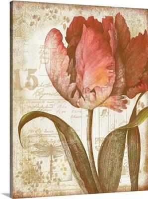 Tulip Botanical
