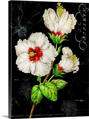 White Hibiscus on Black