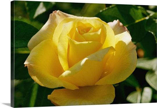 A.C. Postel Memorial Rose Garden, Santa Barbara, California
