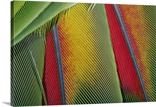 Extreme close up of bright bird feathers Wall Art, Canvas Prints ...