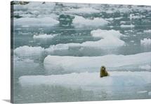 Glacier Bay National Monument, U.S. Alaska