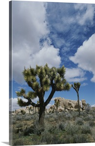 joshua tree national park divorced singles The mission of this group is its name i wanted to do that    just not alone aims to be positive and safe environment for members to experience things that, for whatever reasons, you longed for.