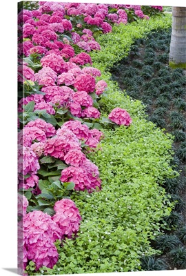 A boder of spring flowers, including hydrangea blooms