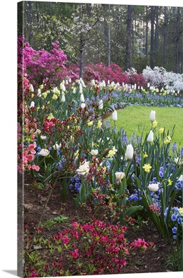 A border of spring flowers