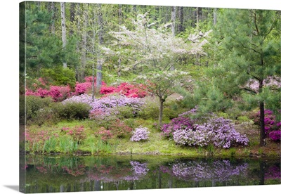 A mixture of dogwood and azaleas in the garden
