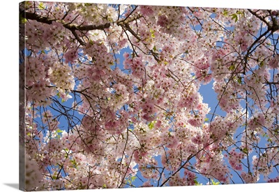 A tree full of blossoms