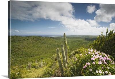 ABC Islands, Curacao, Northern Curacao, Christoffel National Park