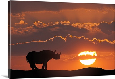 Africa, Kenya, Composite of white rhino silhouette and sunset
