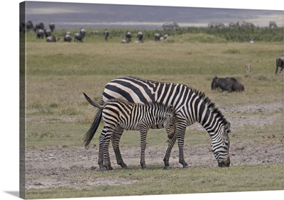 Africa, Tanzania, Ngorongoro Crater