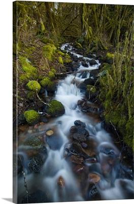 Alice Lake Provincial Park, Squamish, British Columbia, Canada