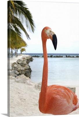Aruba, Renaissance Island, Caribbean Flamingo