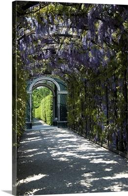 Austria, Vienna, Schonbrunn Palace, wisteria arbor in garden